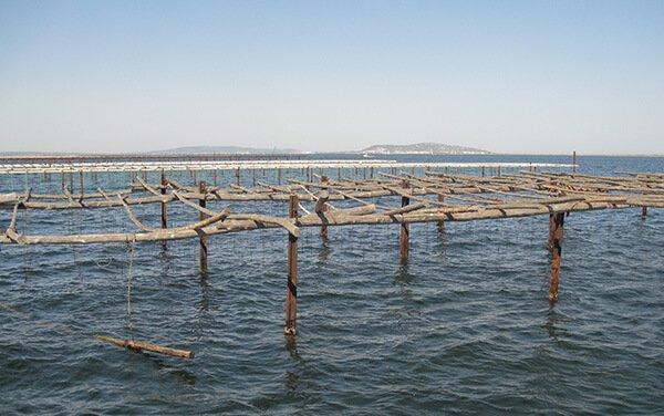 Visiter l'étang de Thau